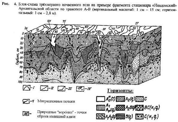 Симметрия почвенного покрова